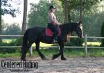 Instructie Centered Riding en Rechtrichten